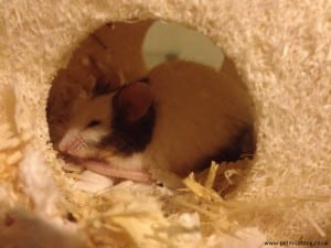 Mouse hiding in house