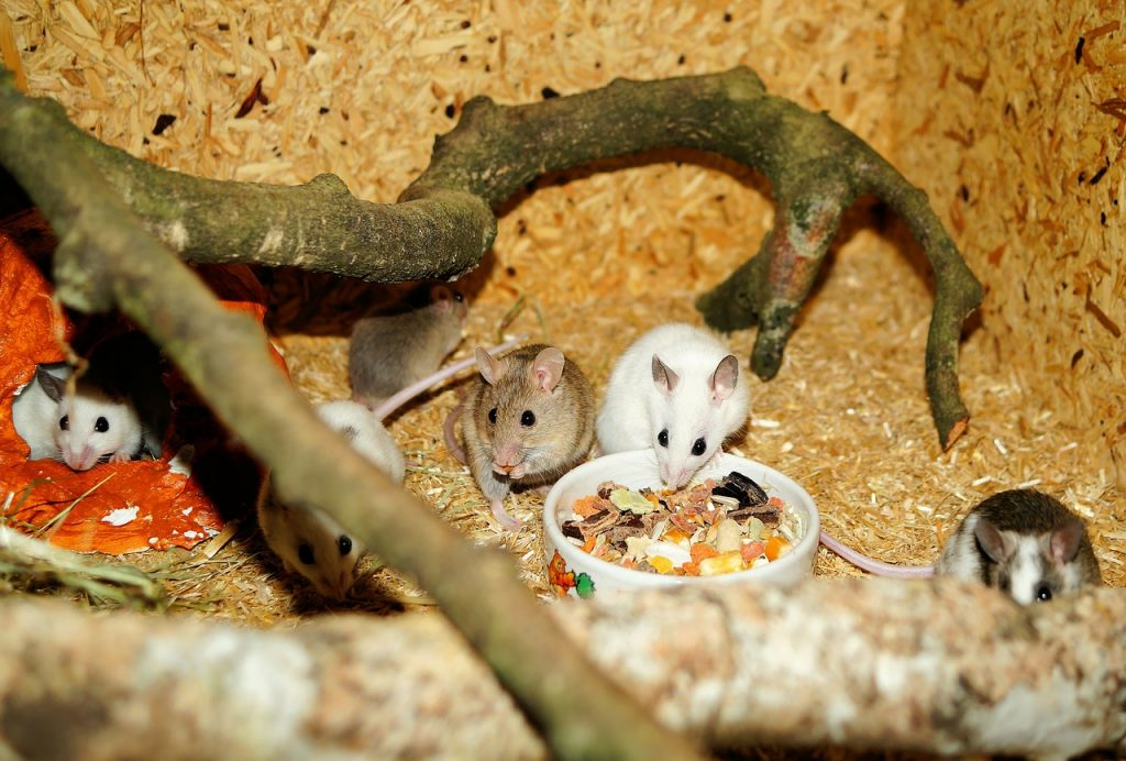 Some Mice Eating Food