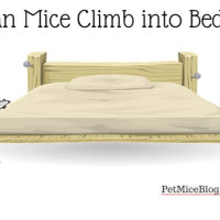 Can Mice Climb into Beds