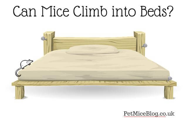 can mice climb into beds pet mice. Black Bedroom Furniture Sets. Home Design Ideas