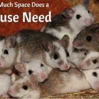 How Much Space Does a Mouse Need