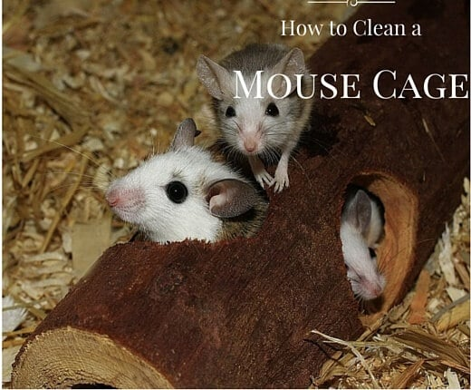 How to Clean a Mouse Cage