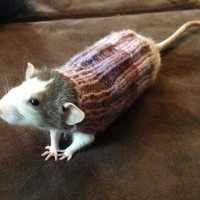 Mouse Clothes
