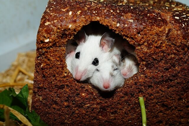 Signs That You Have Mice in Your Home
