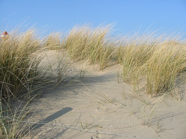 Beach dune for mice to nest in