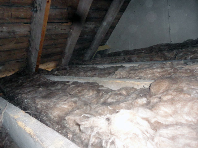 where should you look for mice in your home loft