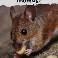 Do Mice Have Thumbs