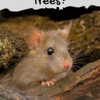 Do Mice Live in Trees