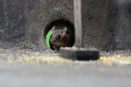 How to Remove and Keep Mice out of Your Oven