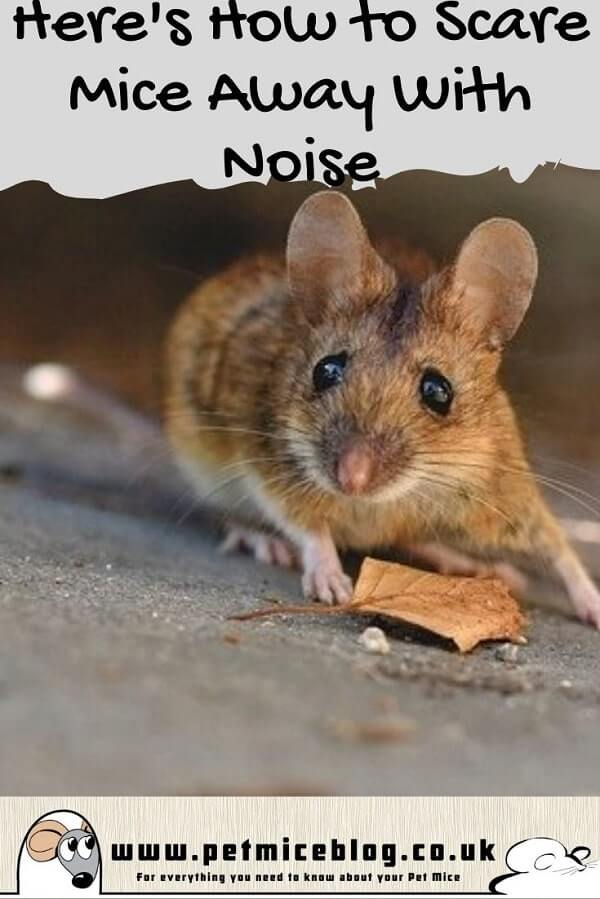 How to Scare Mice Away With Noise